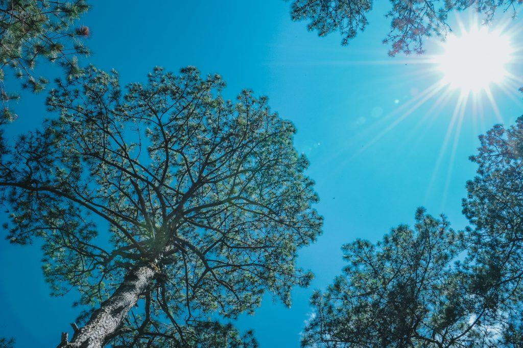 Sonne tanken, beim Spaziergang im Wald